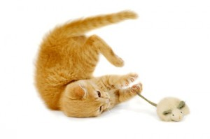 catnip growers profit from cat toys