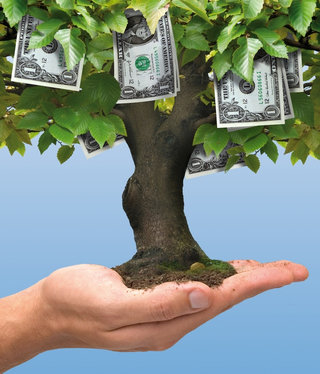 Backyard Cash Crops earn extra cash growing trees in your backyard - profitable plants