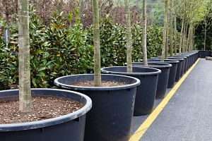 How To Make 40 000 Or More Growing Potted Trees Profitable Plants Digest