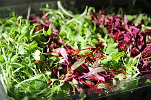 mixed micro greens