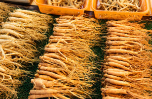 profitable ginseng roots