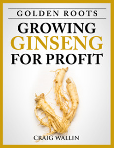 Ginseng ebook cover-sm