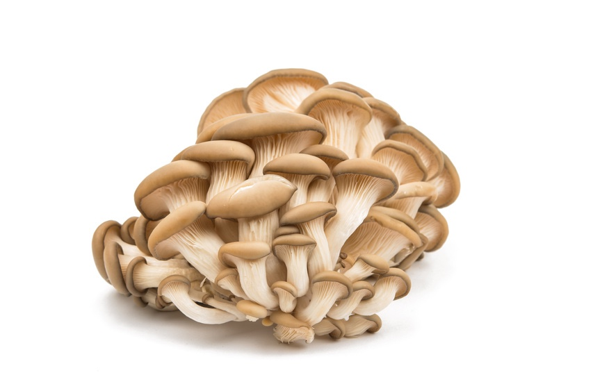 Top 12 FAQs About Growing Gourmet Mushrooms For Profit