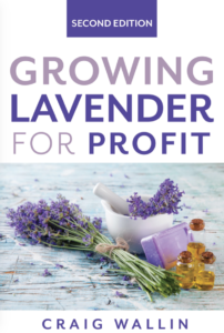 How To Start A Lavender Business Profitable Plants